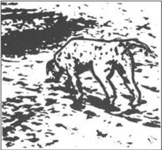 Analyse du dernier test avec les taches noires Perro